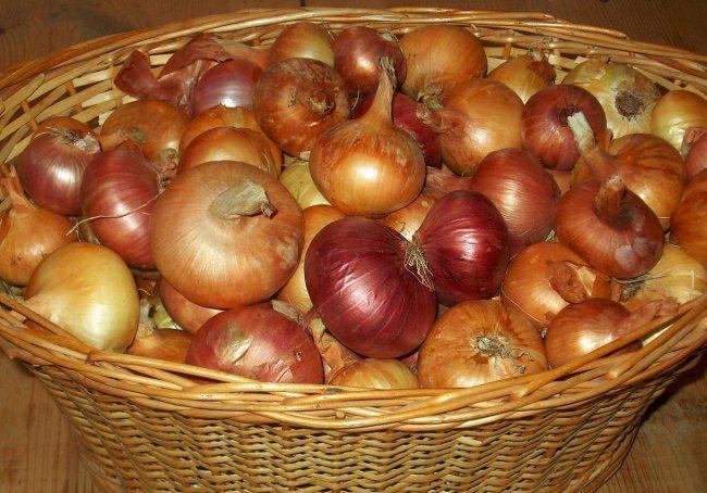 طرق حفظ البصل